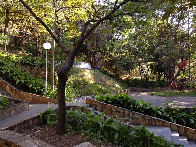 bairro-anchieta-vegetação