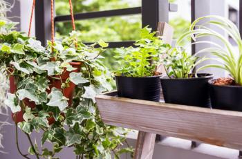 Jardim no apartamento: confira os benefícios