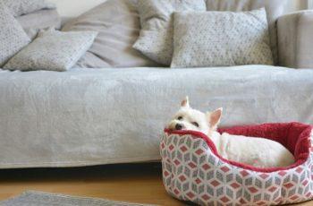 Pets em apartamento: dicas de como criar